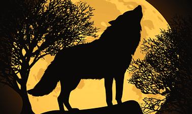 Verander jij ook in een Weerwolf rond Volle Maan?
